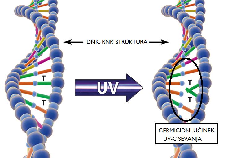 prikaz unicevalnega ucinka UV-C sevanja